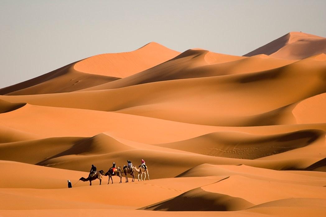 Καμήλες διασχίζουν την έρημο του Μαρόκου