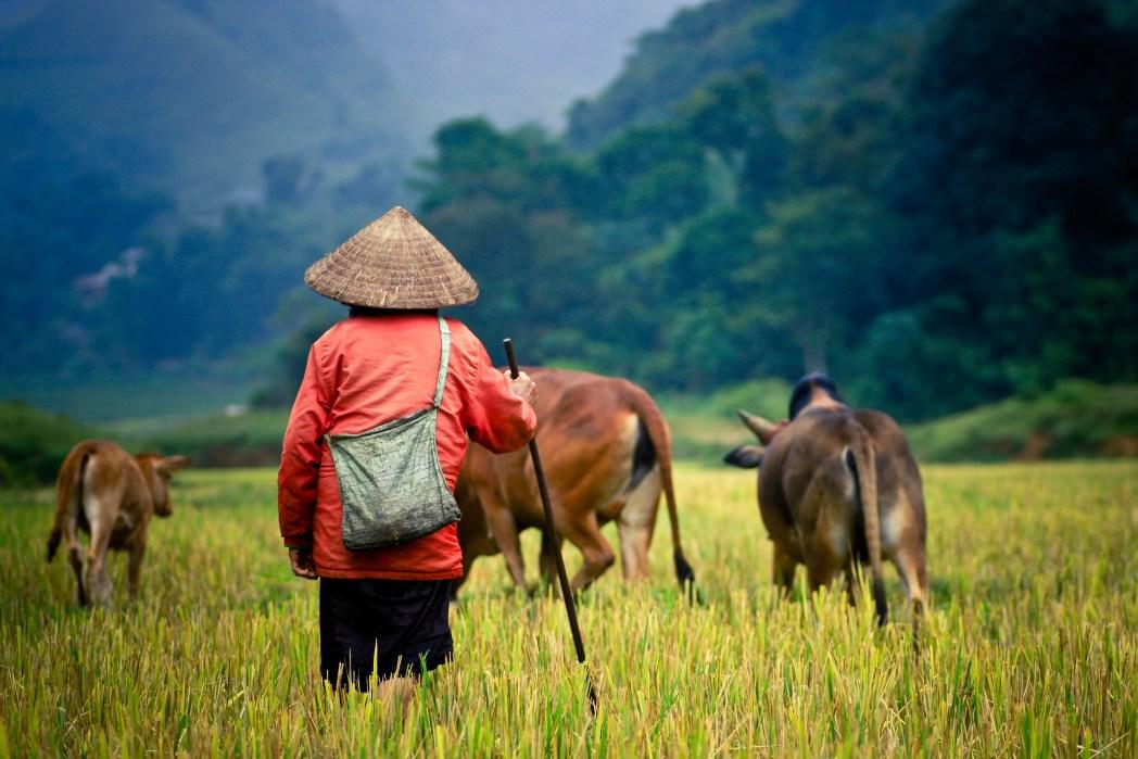 Η Ζωή στην επαρχία του Βιετνάμ