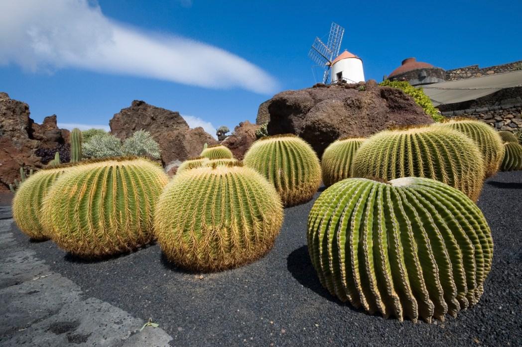 Kακτώδες τοπίο στο Λανθαρότε, απ' τα πιο φθηνά νησιά στις Κανάριες Νήσους